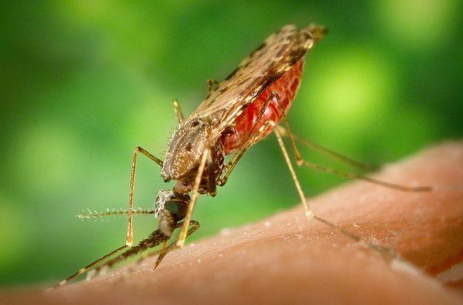 Malaria in Thailand